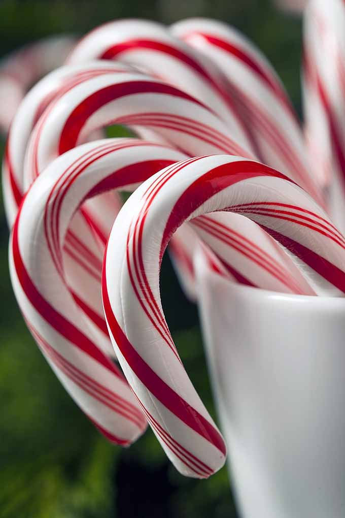 RITE Candy cane and cops